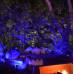 Уличная лазерная подсветка Garden RB