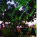 Уличная лазерная подсветка Garden RG XL
